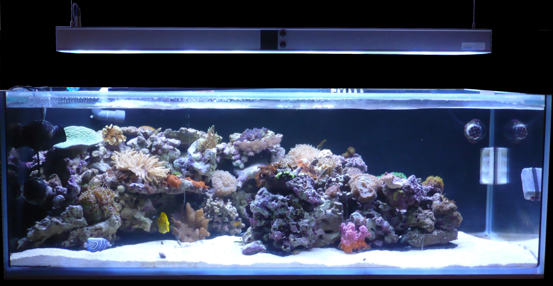 eclairage led aquarium. Black Bedroom Furniture Sets. Home Design Ideas